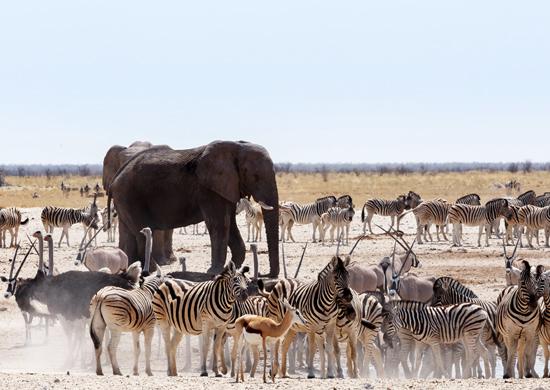 Didysis turas: Namibija - Botsvana - Zambija (su vadovu iš Lietuvos)