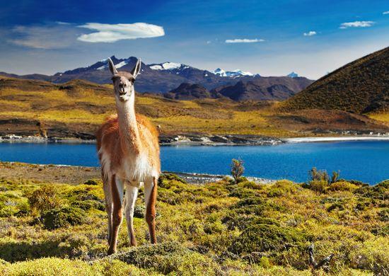 Tolimoji Čilė