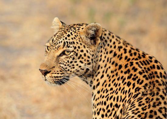 Pietų Afrikos Respublika – didmiesčių ir laukinės gamtos namai (su vadovu iš Lietuvos)