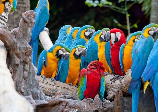 Trumpa pažintis su Kosta Rika (su galimybe pratęsti poilsiu)