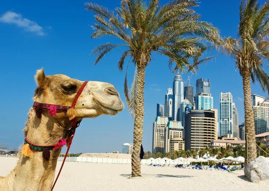 Poilsinė kelionė: Jungtiniai Arabų Emyratai - Dubajus