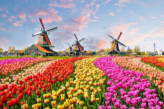 Pavasarinių gėlių žydėjimas Europos soduose 5d.