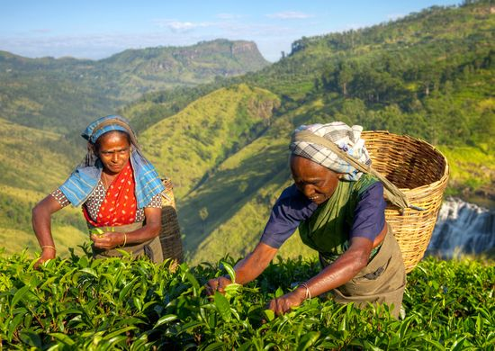 Šri Lanka: gražioji gamtos oazė