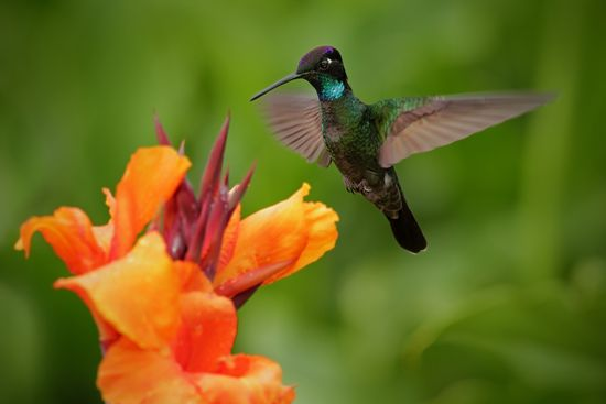 Atogrąžų pagunda: tropiškoji Kosta Rika (su rusakalbiu gidu)