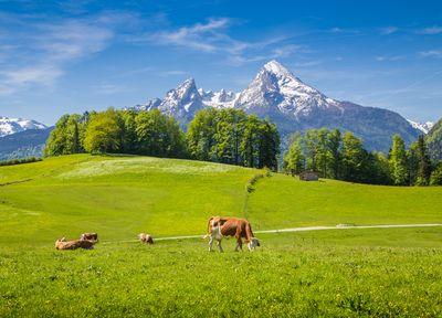 Austrijos Alpės 5 d.