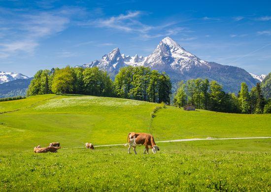 Bavarijos, Austrijos ir Italijos Alpės 7d.