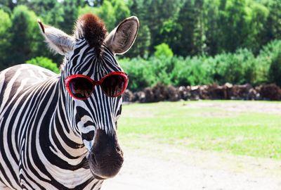 Serengečio parkas - Legolendas - Heidės parkas