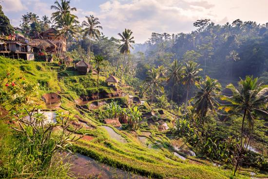 Balis turiningai