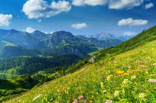 Viena - Zalcburgas - Austrijos Alpės
