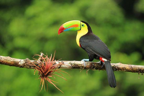 Atogrąžų pagunda: tropiškoji Kosta Rika (su grupe iš Lietuvos)